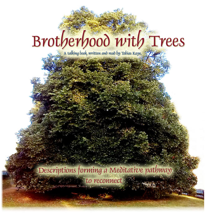 CD – Brotherhood With Trees